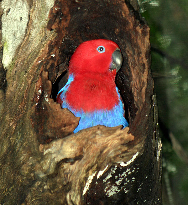 parrot in tree hole